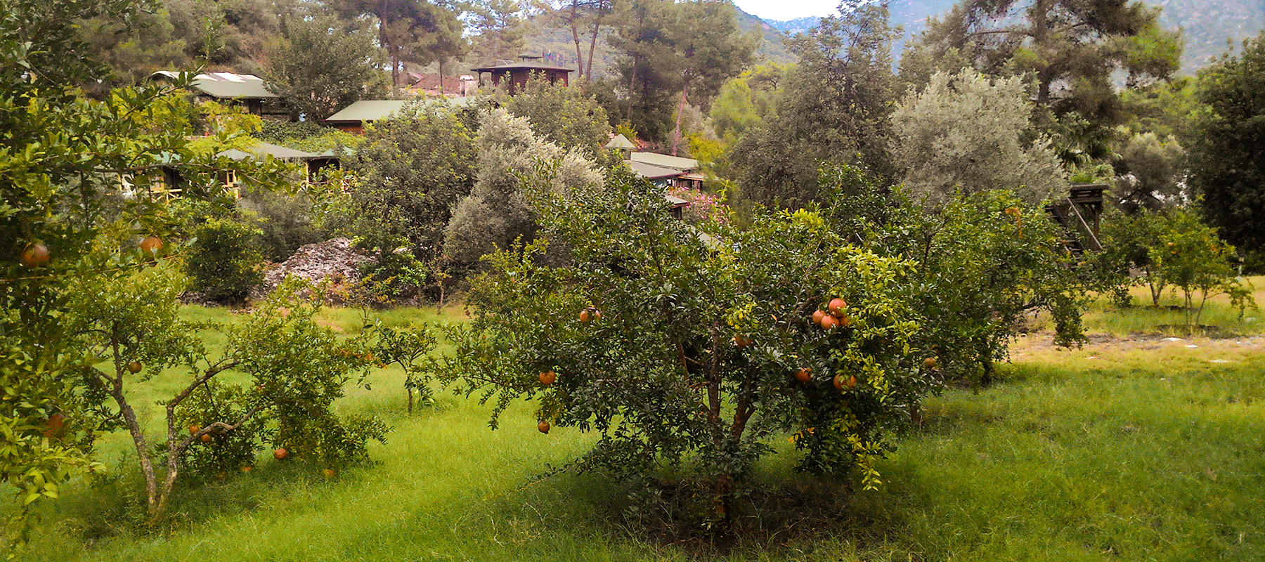 Olympos Angels Garden